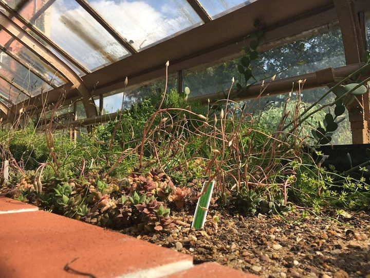 Rośliny - Ogród Botaniczny