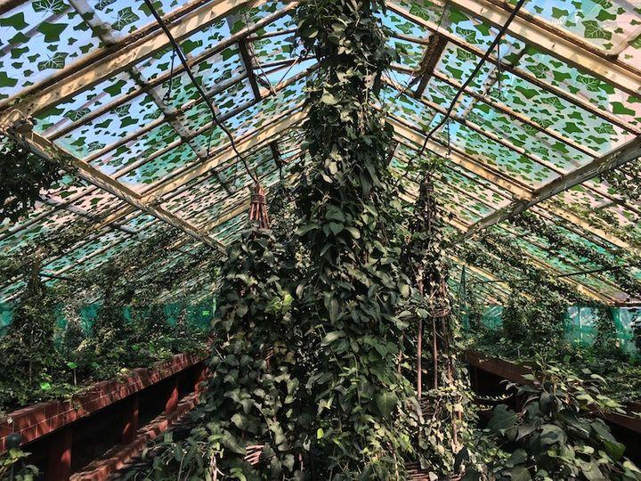 Rośliny w szklarni Ogrodu Botanicznego we Wrocławiu