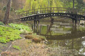 Most w Ogrodzie Botanicznym we Wrocławiu